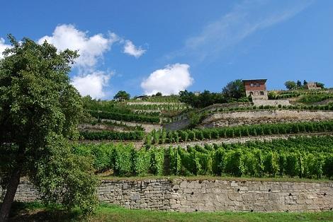 Urlaub in Deutschland Weintour Saale Unstrut